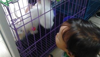 Waspada Kucing Jantan Rentan Alami Fus Rumahkerang